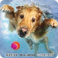 【摩達客】(預購)(男童/女童)美國進口The Mountain 水中黃金獵犬 純棉環保短袖T恤
