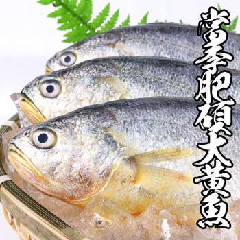 海鮮王  當季肥碩大黃魚 *5件組(400g±10%/尾)