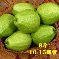 坤田水果 珍珠芭樂(1箱)單箱8斤10顆-15顆