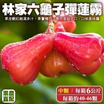 果農直配-六龜子彈蓮霧中顆1箱(40-46入/6kg/箱)