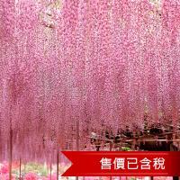 北陸立山雪壁合掌村兼六園粉蝶芝櫻紫藤輕井澤6日 含稅 旅遊