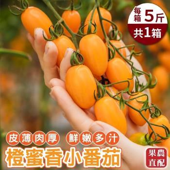 果物樂園-美濃人氣橙蜜香小番茄(5斤±10%)
