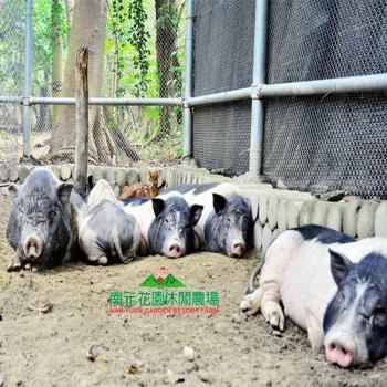 假日不加價【台南 南元花園休閒農場】門票乙張