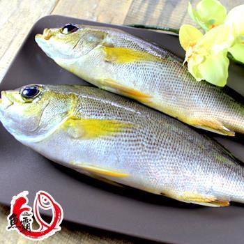 魚博士-魚霸 野生現撈黃雞魚3入組 (200g~250g/入)