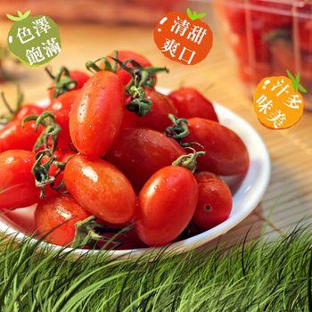 鮮果日誌 玉女小番茄(600克10盒入原箱)