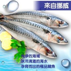 [老爸ㄟ廚房] 上等挪威整尾鯖魚 10尾 (350G/尾)