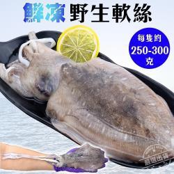 海肉管家-鮮凍野生軟絲(10隻/每隻約250~300g±10%)