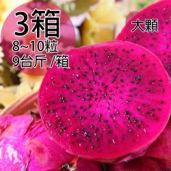 【一等鮮】紅肉火龍果大果原裝箱3箱(8~10粒/9台斤/箱〉