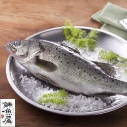 【鮮魚屋】現撈急凍台灣七星鱸魚370g*8條