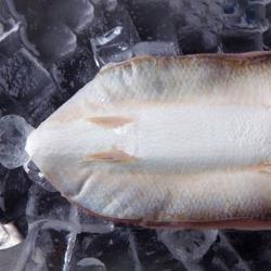 【吉品養生】虱目魚魚肚(200g)