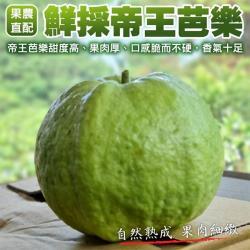 果農直配-嚴選帝王芭樂(10斤±10%含箱重)