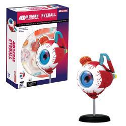 【4D MASTER】626006 立體拼組模型人體解剖教學系列-眼球